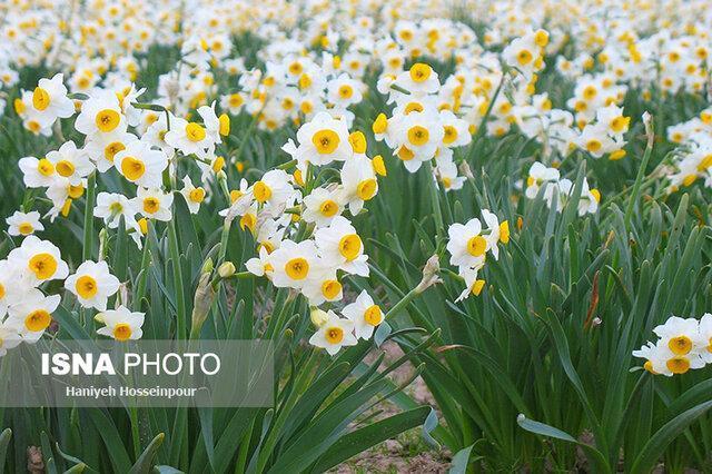 یک گل با هزاران ویژگی معجزه آسا