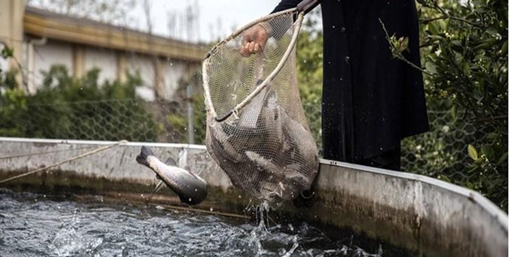 سیستم هوشمند پرورش ماهی در کشور بومی شد
