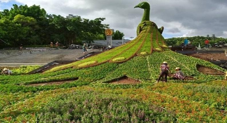 مجسمه گیاهی طاووس چین