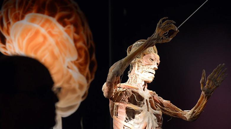 دانشمندان پیروز شدند اولین اطلس جامع سلول های بدن انسان را تهیه نمایند