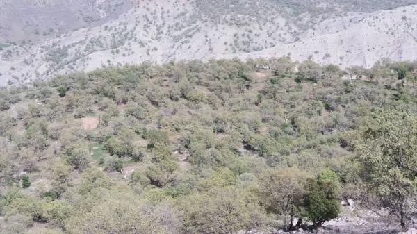 خبرنگاران مبارزه با جوانه خوار جنگل های بلوط دزفول، درانتظار احداث باند فرود