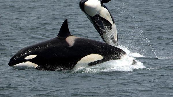 مقاله: بهترین مکان ها برای تماشای نهنگ در کانادا