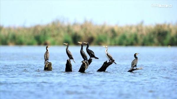 شناسایی بیش از 100 گونه پرنده مهاجر در اردبیل